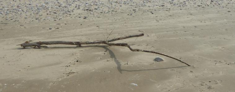 b_033_075_Rhossili_Bay_Beach_Driftwood