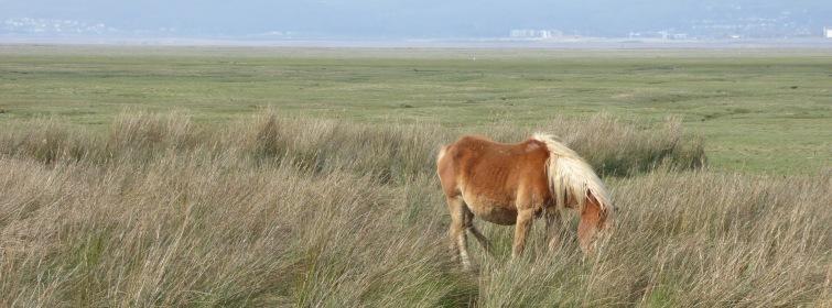 b_033_085_Crofty_Ponies