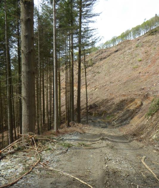 b_057_078_Llyfnant_Valley_Forestry_Path