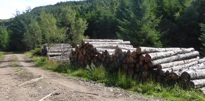 b_127_215_Carsaig_ForestStackedLogs